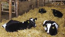 家族の力が結集して生まれる新しい酪農の形