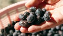 十勝の気候と健康な土が育んだ 甘酸っぱいベリー 金田ベリー園のジャム