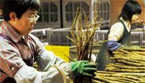 豊かな土壌が生んだ和田さんのごぼう