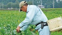 健康な野菜をつくることで 人と農場が支え合う関係を築きたい